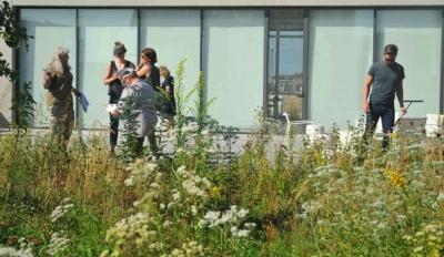 Bioblitz on the Studio Gang rooftop