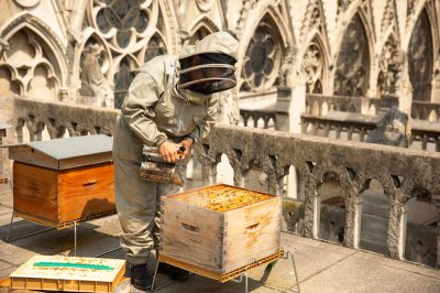 Beekeeper atop Notre Dame Cathedral in happier days