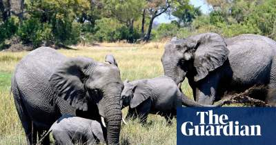 Elephants in Botswana. Courtesy of The Guardian