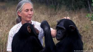 Jane Goodall, one of the heroes we'll feature in April. Photo courtesy of dw.com